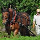 Controlling bracken in the time honoured fashion