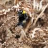 Hoe Common Wildlife 2017